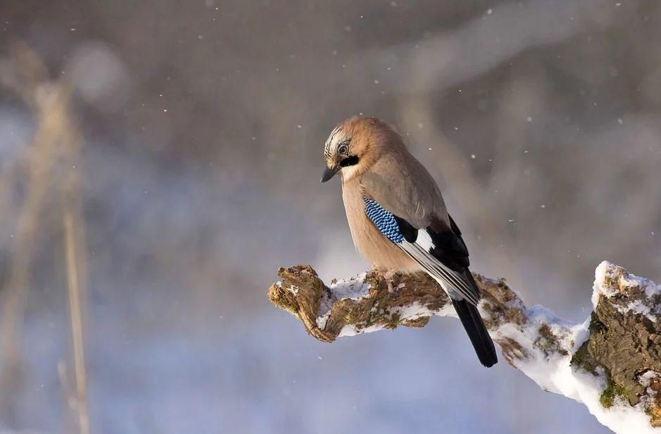 В Красную книгу в регионе занесен почти каждый третий вид птиц