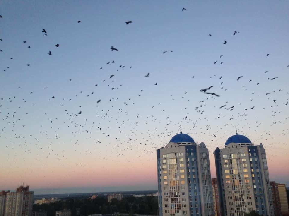 «Соцсети и телефон, когда вы работаете - зло, страшнее коронавируса»: ярославский бизнесмен раскрыл все тайны успешной работы на удаленке