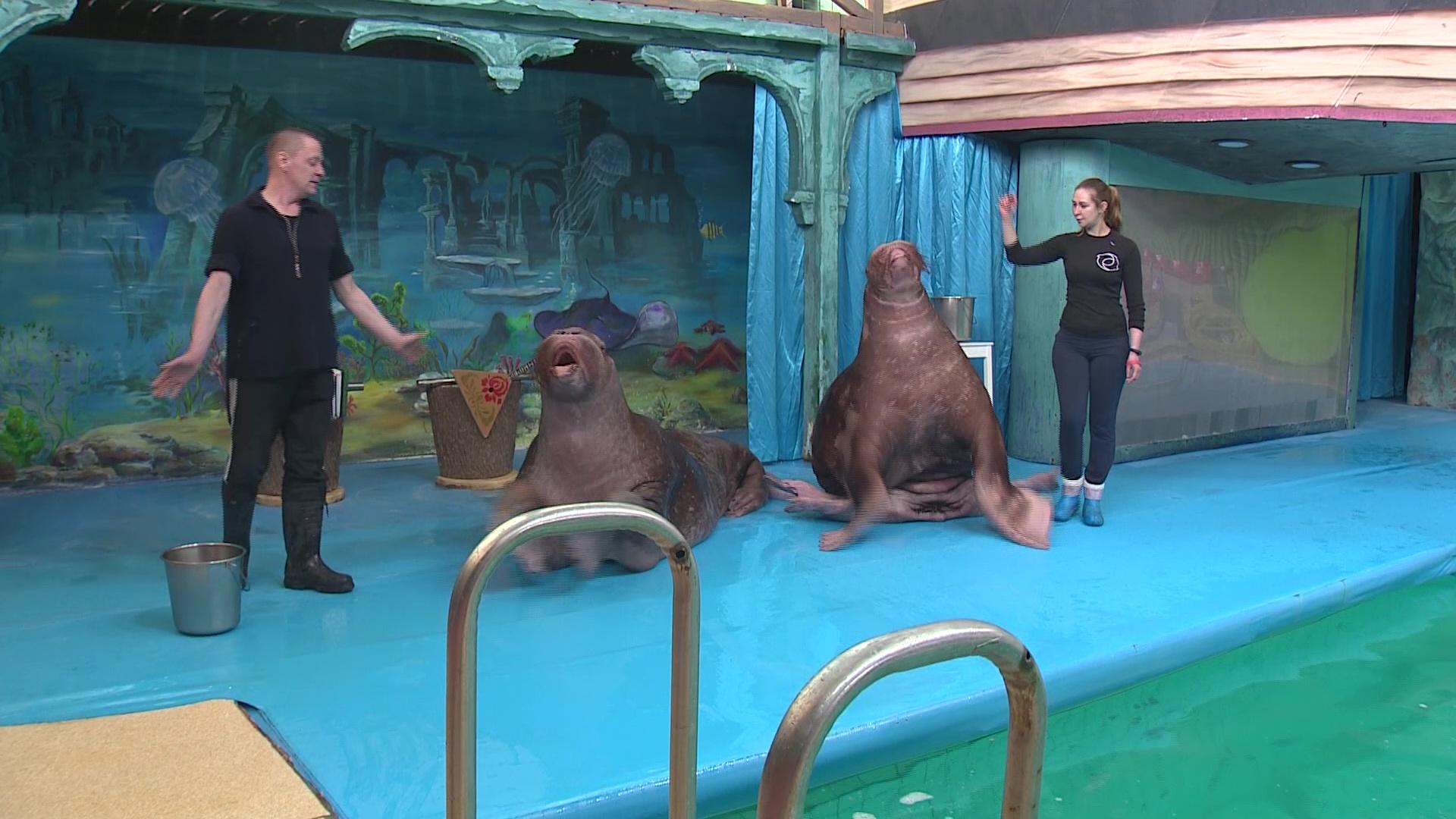 Дельфинарий и цирк ушли на карантин: как поменялась жизнь артистов-животных