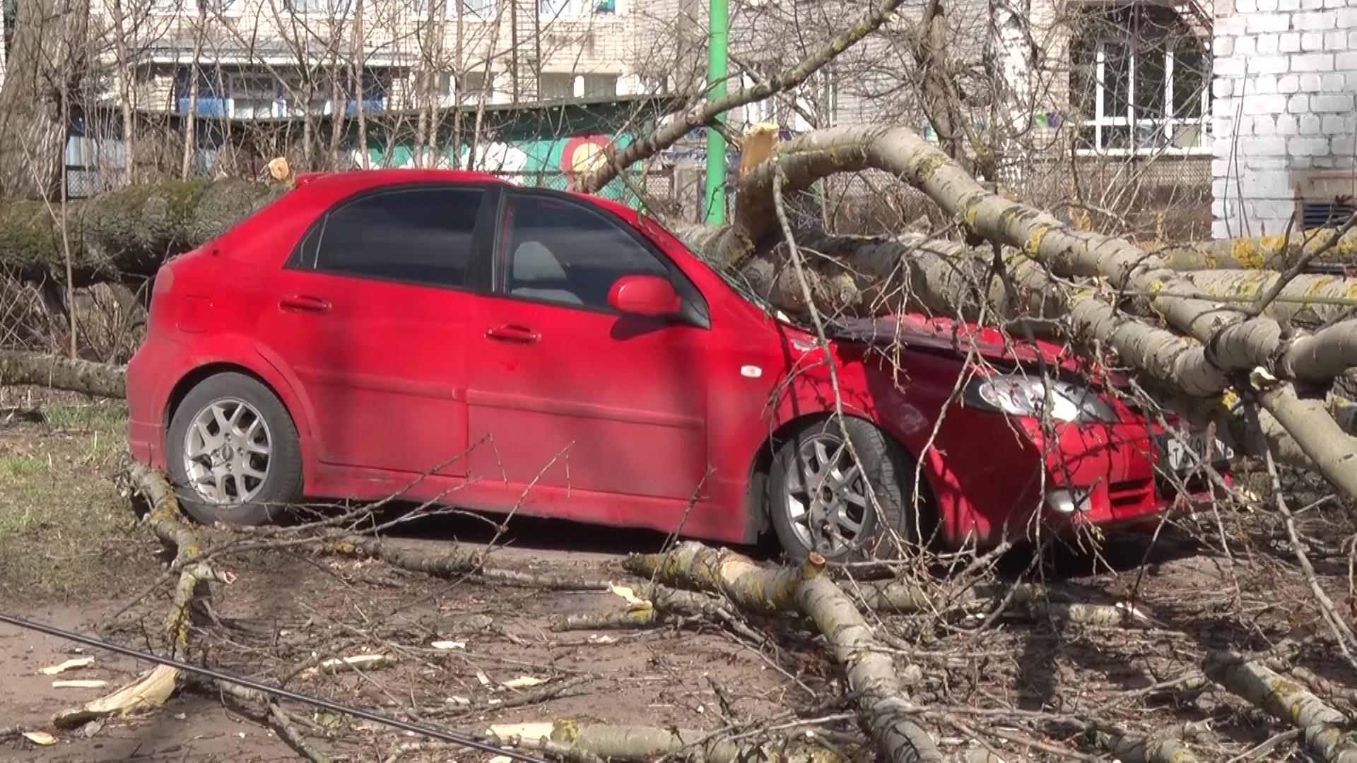 Упавшие деревья и улетевшие мусорные баки: сильный ветер устроил погром в Ярославле