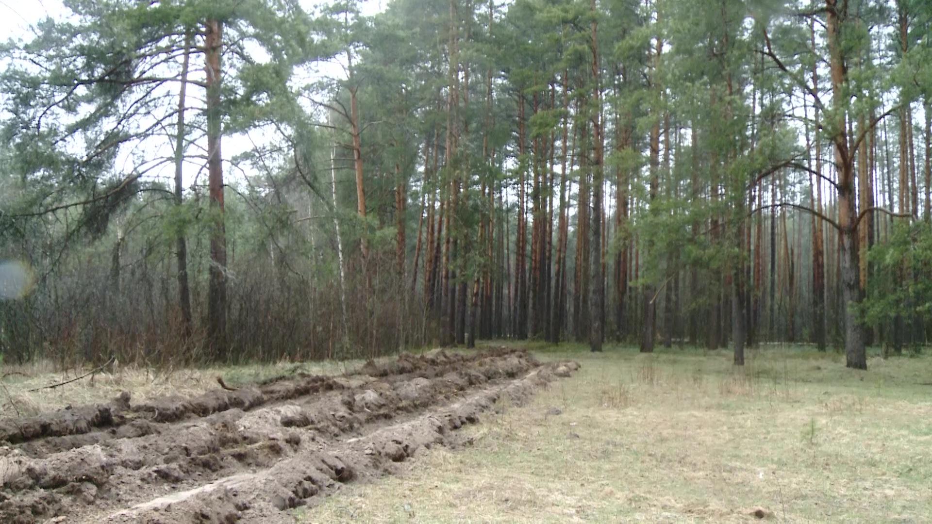 В лесах Ярославской области начали создавать минерализованные полосы для сдерживания пожаров