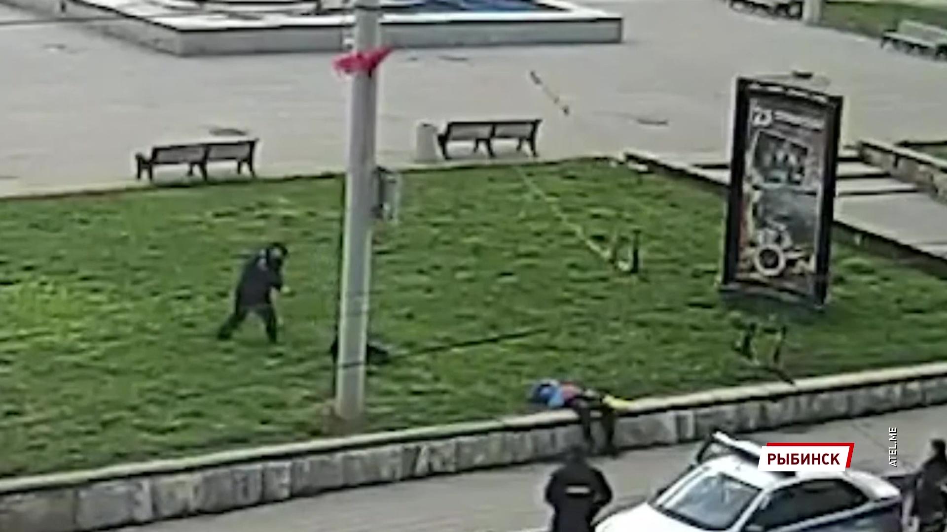 В Рыбинске полицейский выстрелил в напавшую на него собаку: подробности происшествия