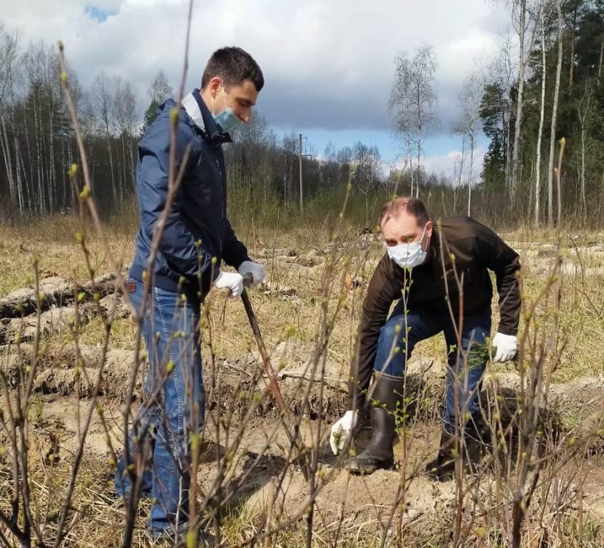 В Некрасовском районе высадили 3500 саженцев