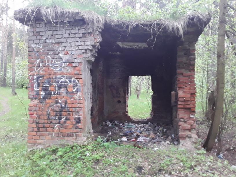 Прокуратура Ярославля требует провести уборку в Тверицком бору