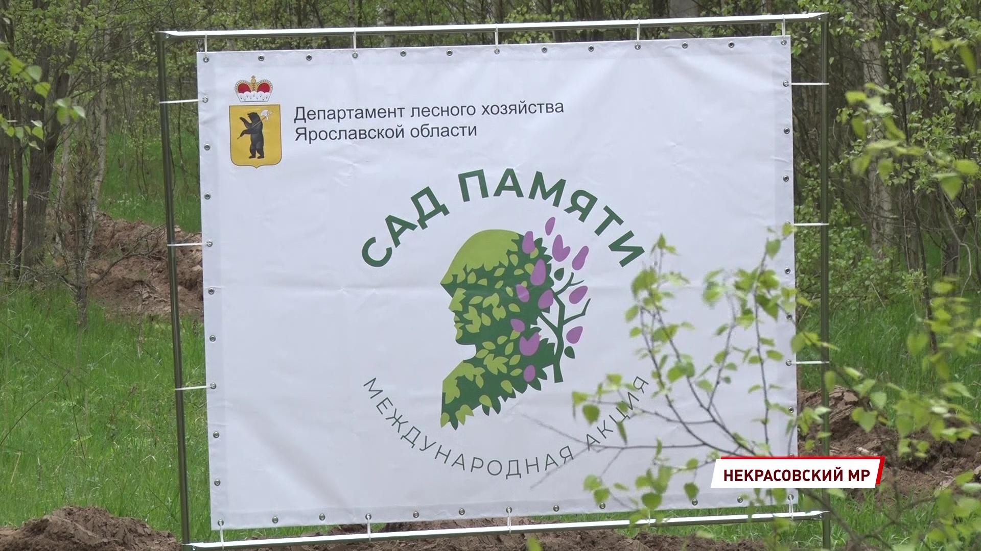 В Ярославской области высадили сто тысяч деревьев в память о погибших на войне