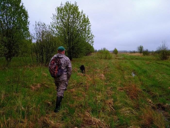 В Ярославле начали патрулировать лесные массивы из-за диких животных