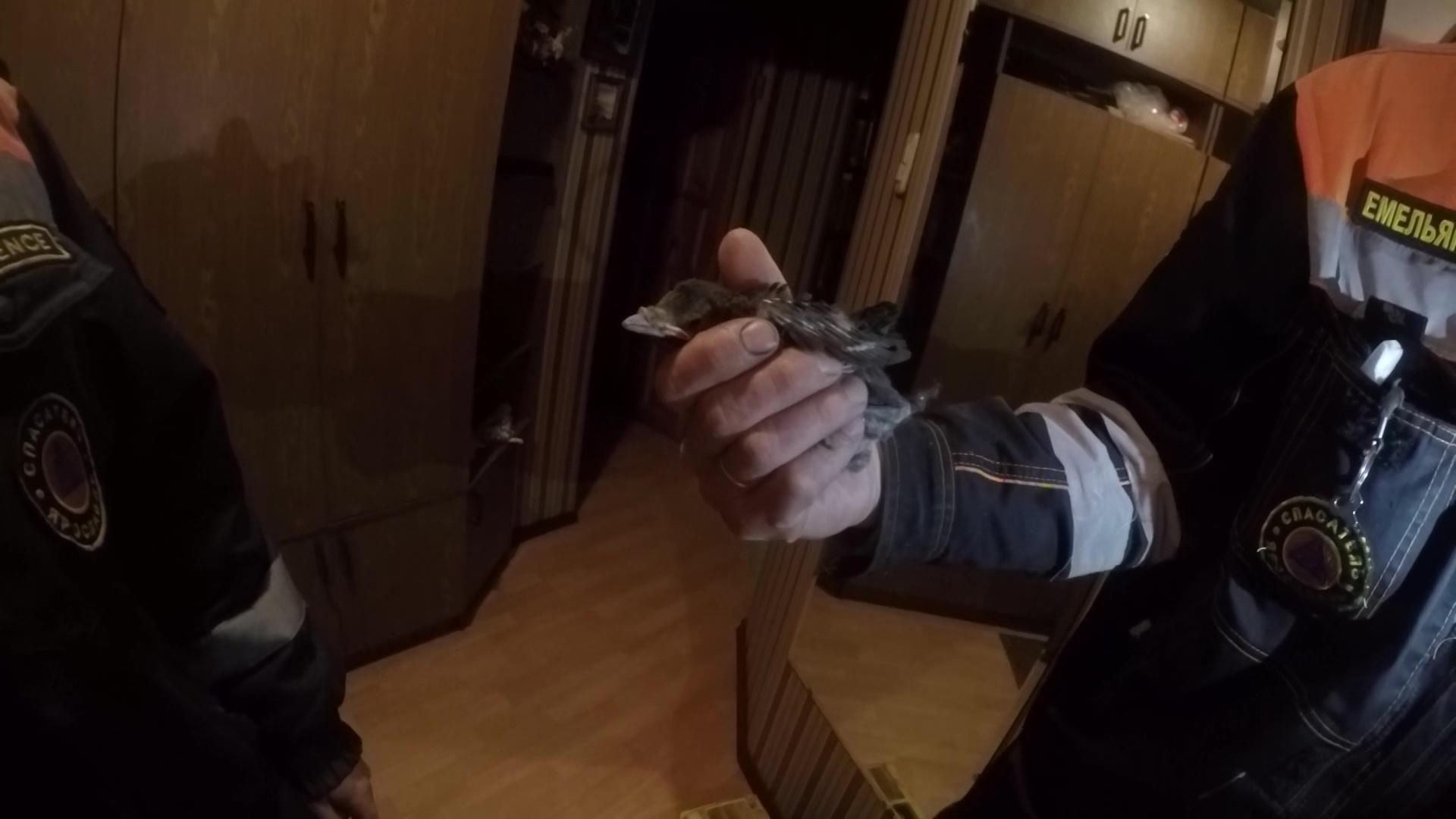 Надоел чирикать в вентиляции: сотрудникам ЦГЗ пришлось вызволять птицу из квартиры