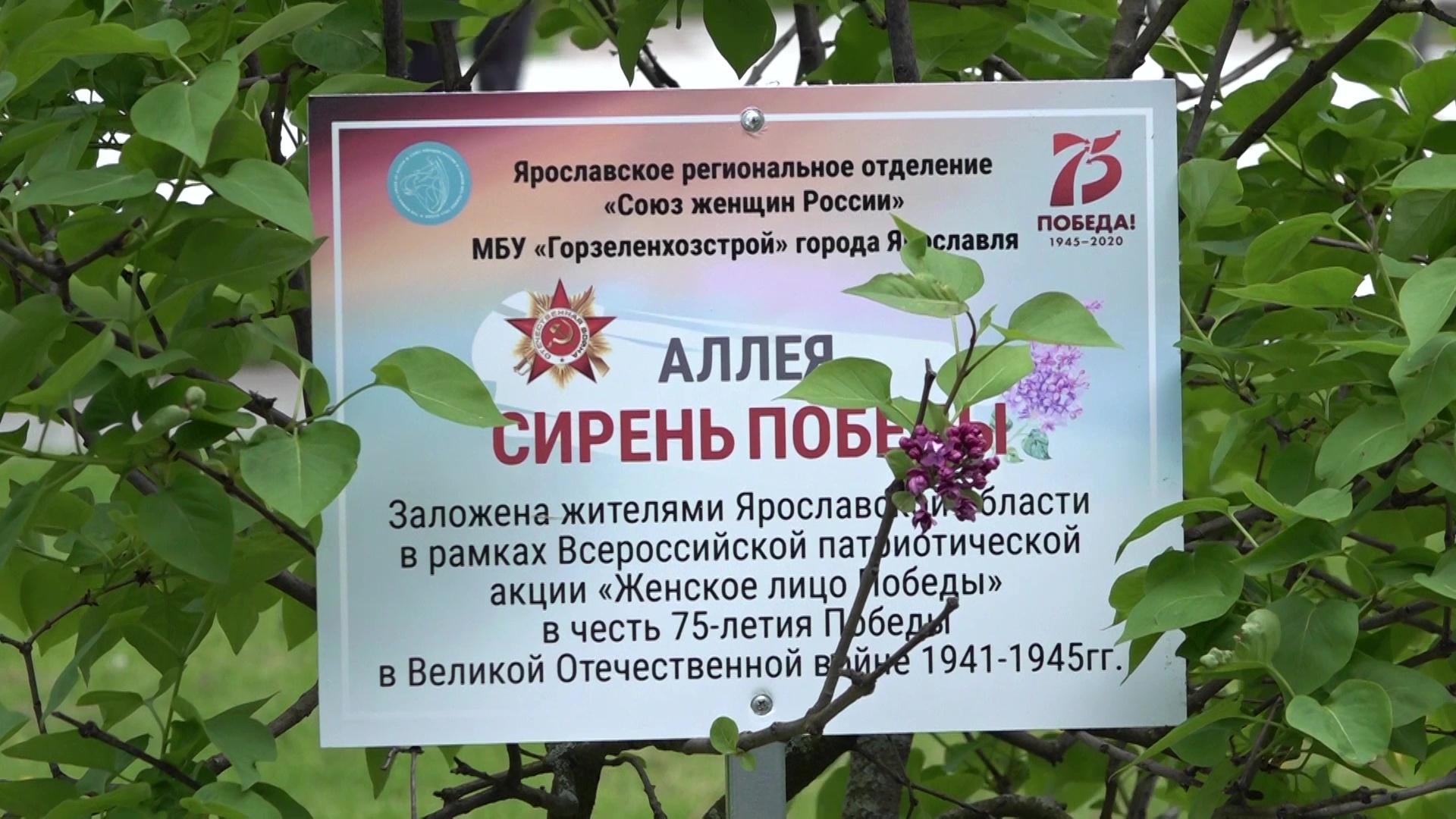 В Ярославле заложили аллею в честь женщин – участниц Великой Отечественной войны