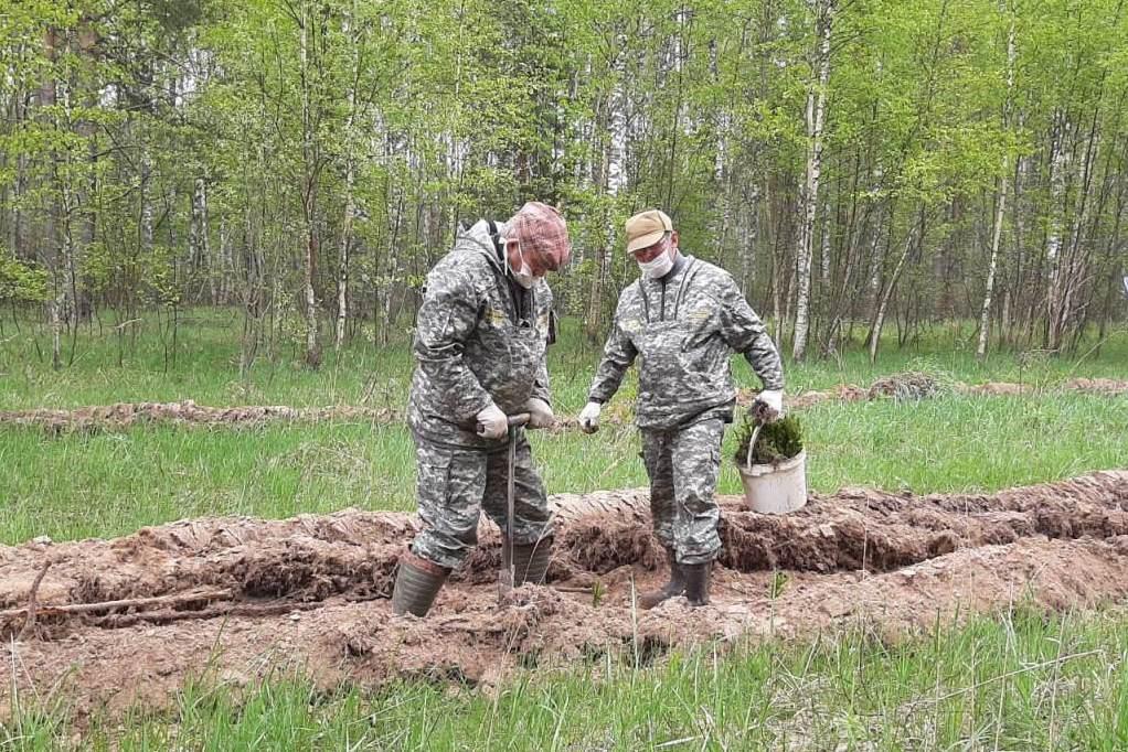 Этой весной в регионе прошли лесовосстановительные работы на территории более 3 тысяч гектаров