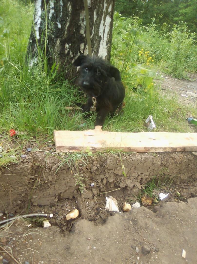 В Ярославле неизвестные привязали к дереву щенка и оставили умирать