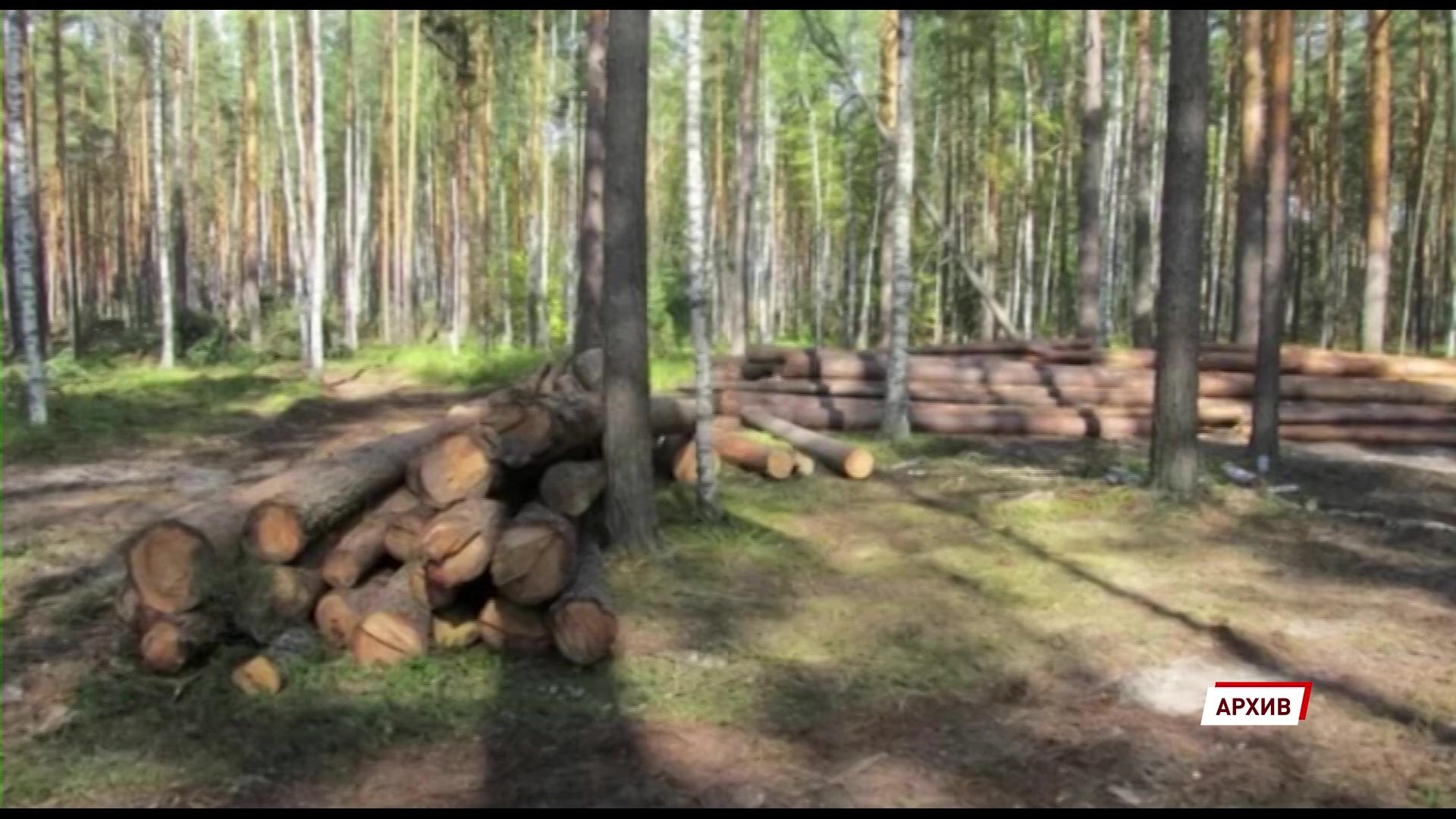 В Угличском районе заготовитель незаконно нарубил дров на миллион рублей