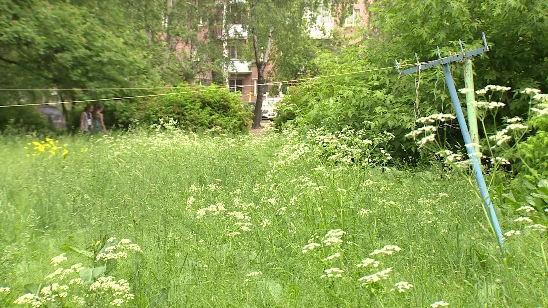 Ярославцы жалуются на джунгли под окнами: кто отвечает за покос травы во дворах