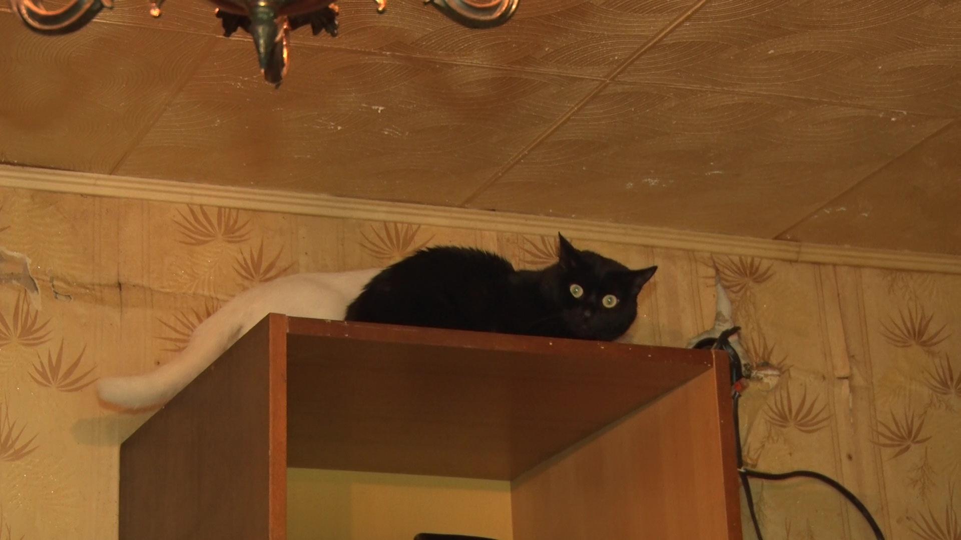 С домом, но без теплых рук: в Ярославле 25 кошек остались одни после смерти хозяина