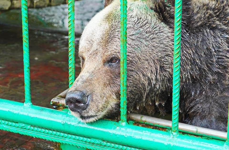 "В Ярославле стартовала акция ""Накорми медведицу Машу"""