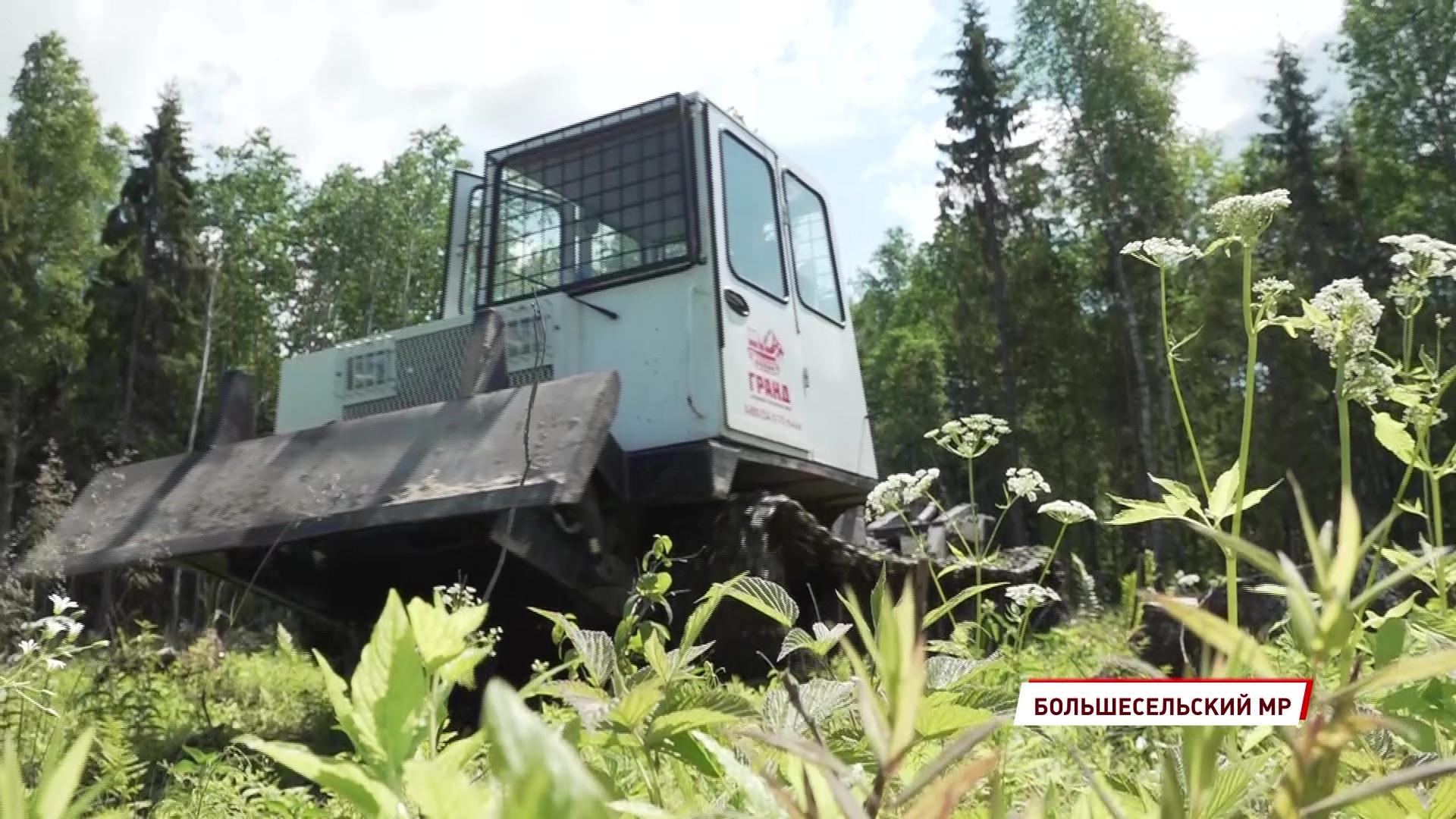 Ярославская область – один из трех регионов в ЦФО, где на данный момент нет лесных пожаров