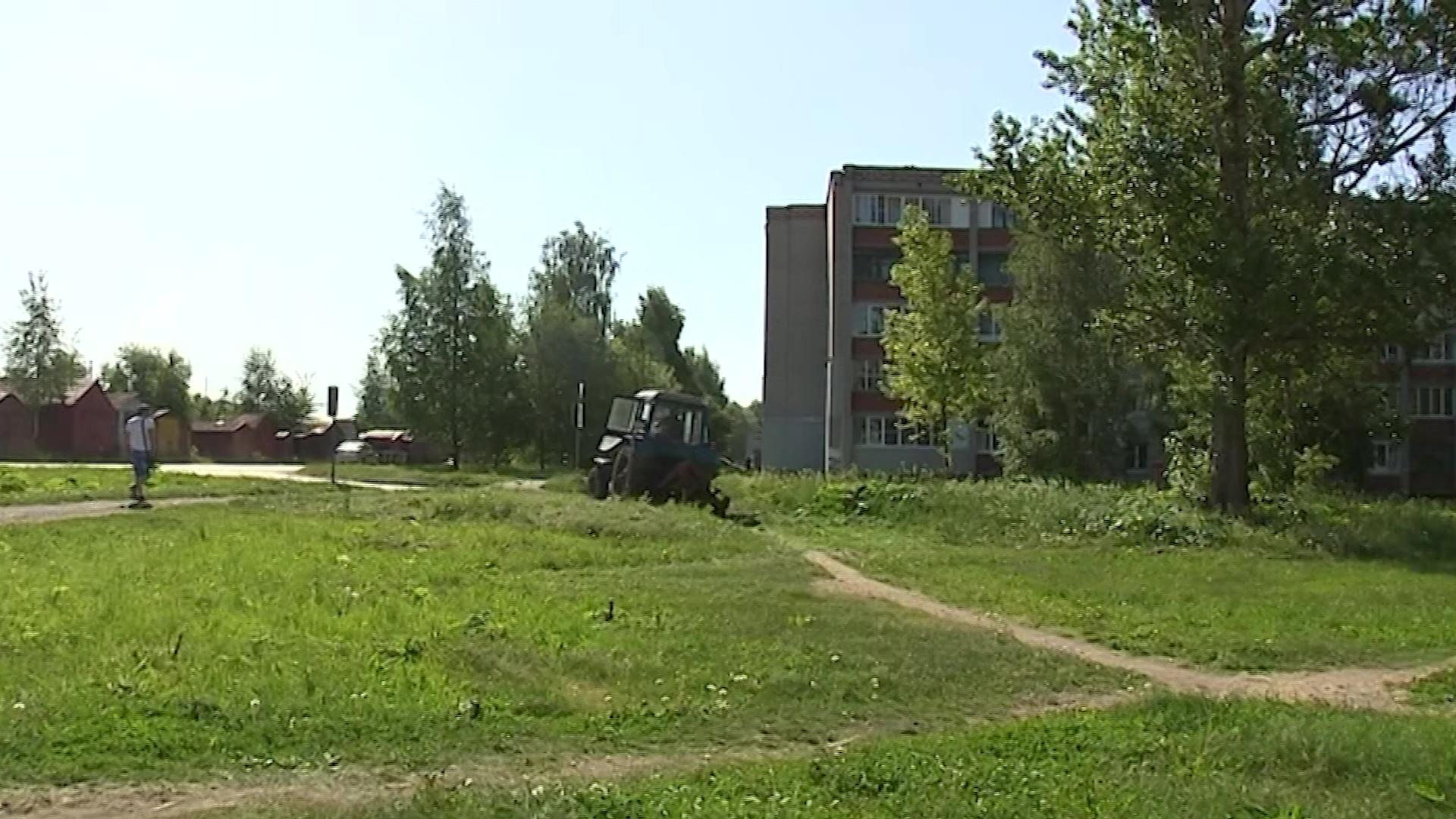 Ярославские коммунальщики продолжают бороться с разрастанием борщевика