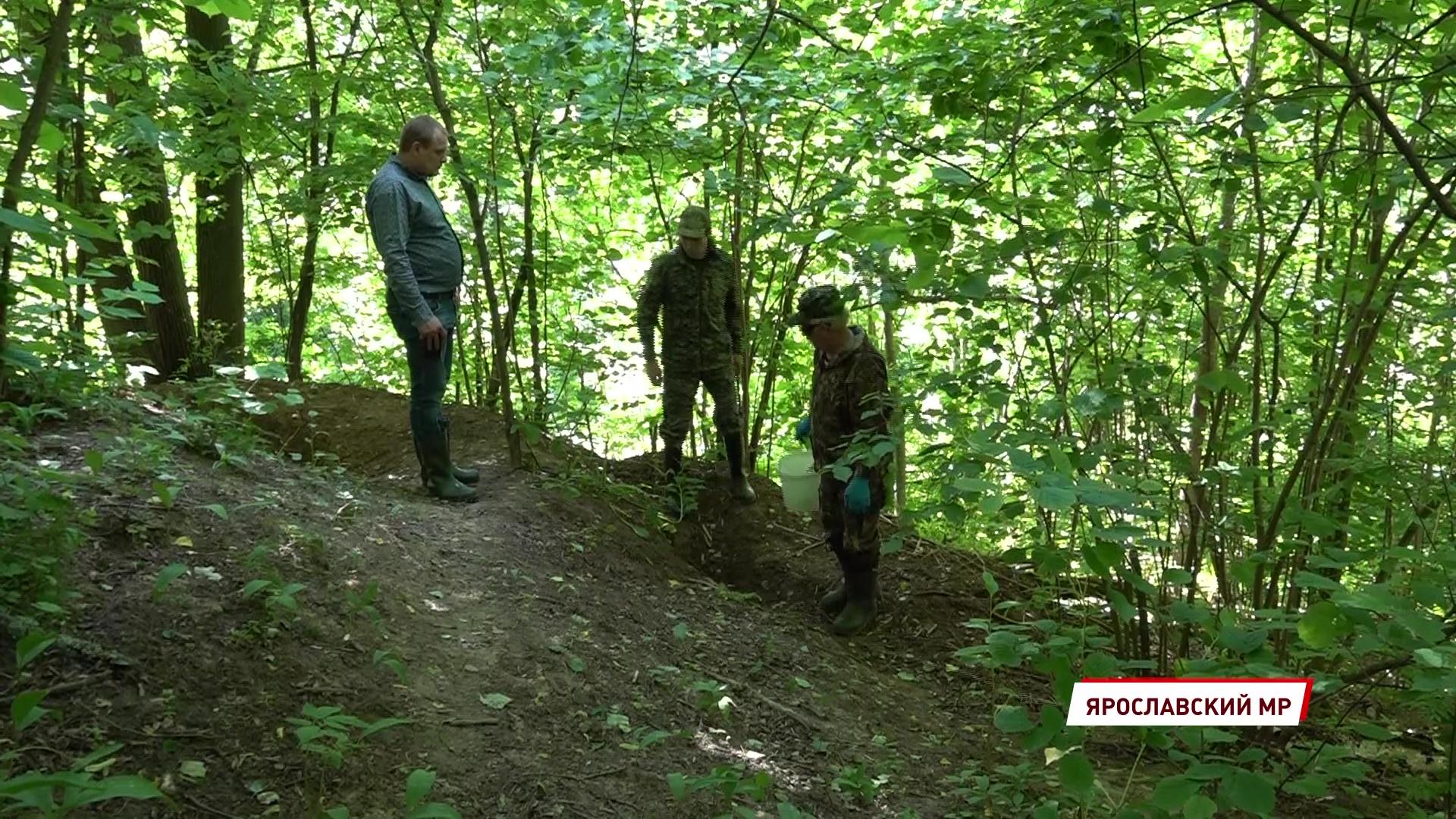 В лесах региона диких животных подкармливают лакомствами с вакциной от бешенства