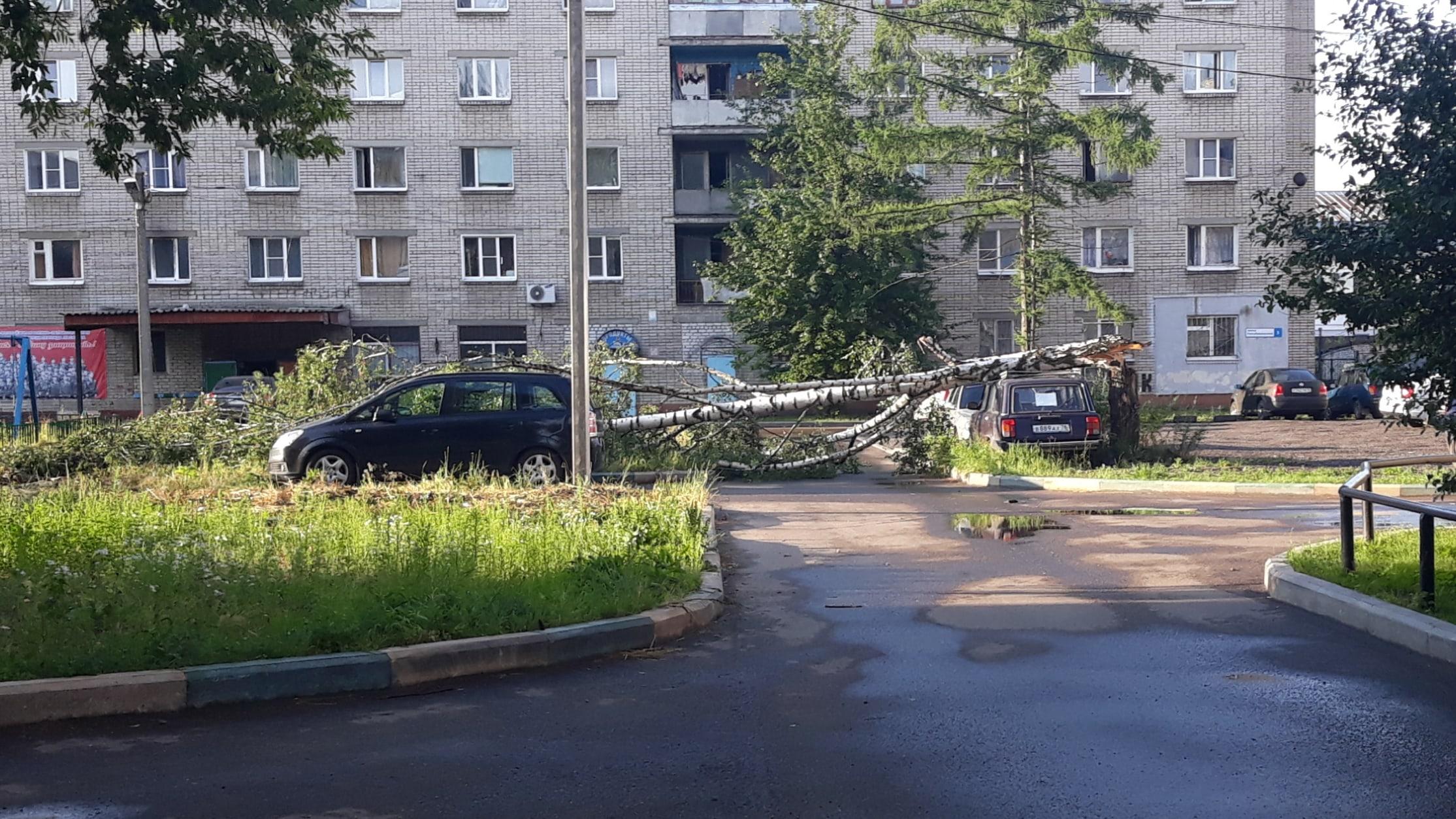 В Ярославле сильный ветер повалил несколько деревьев