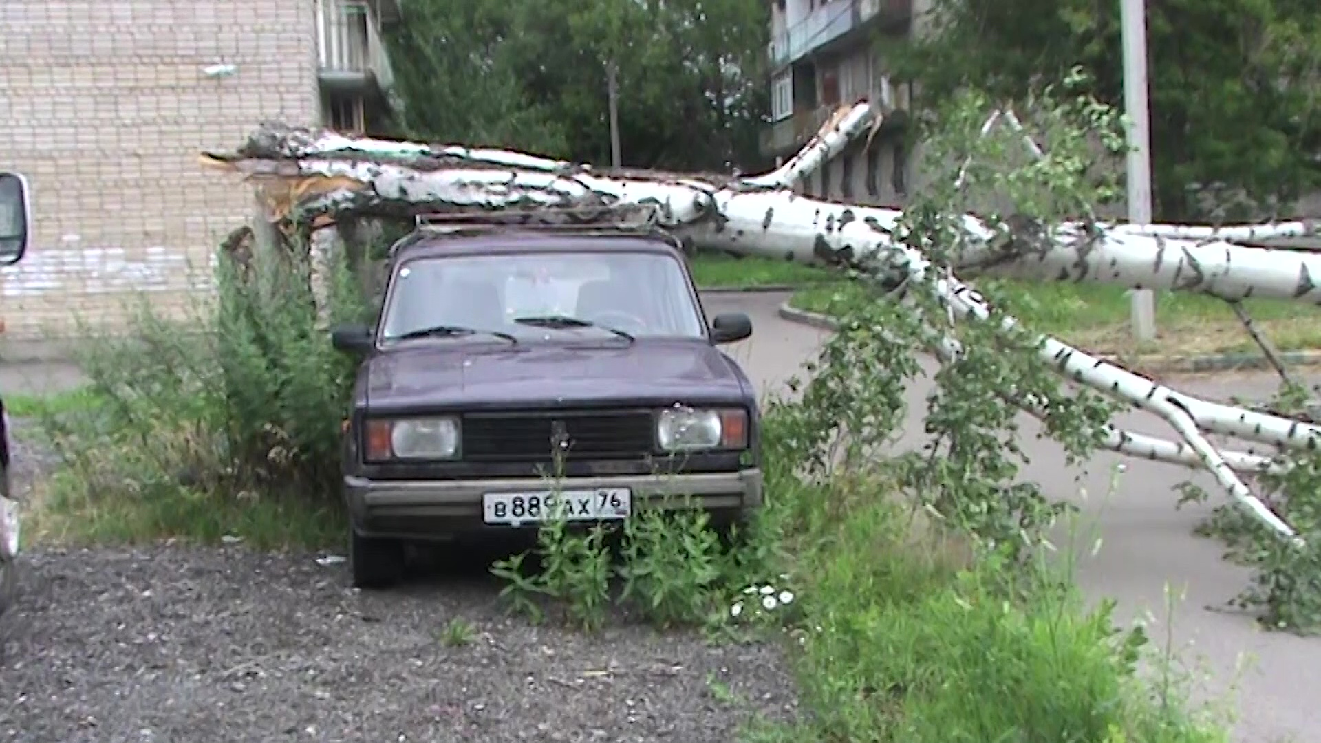 Упавшие деревья и оборванные провода: ночью на Ярославскую область обрушилась стихия