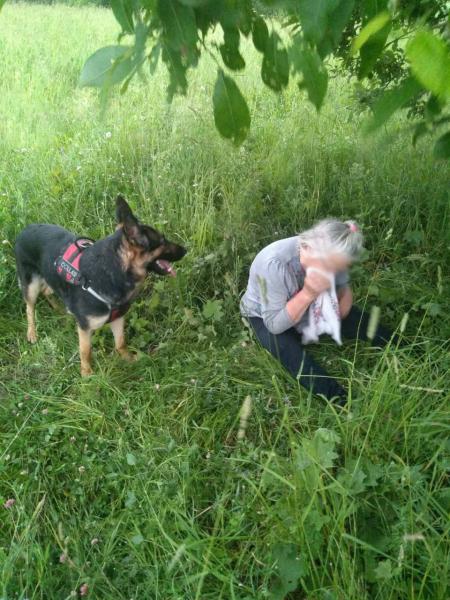 Под Переславлем собака нашла заблудившуюся пенсионерку