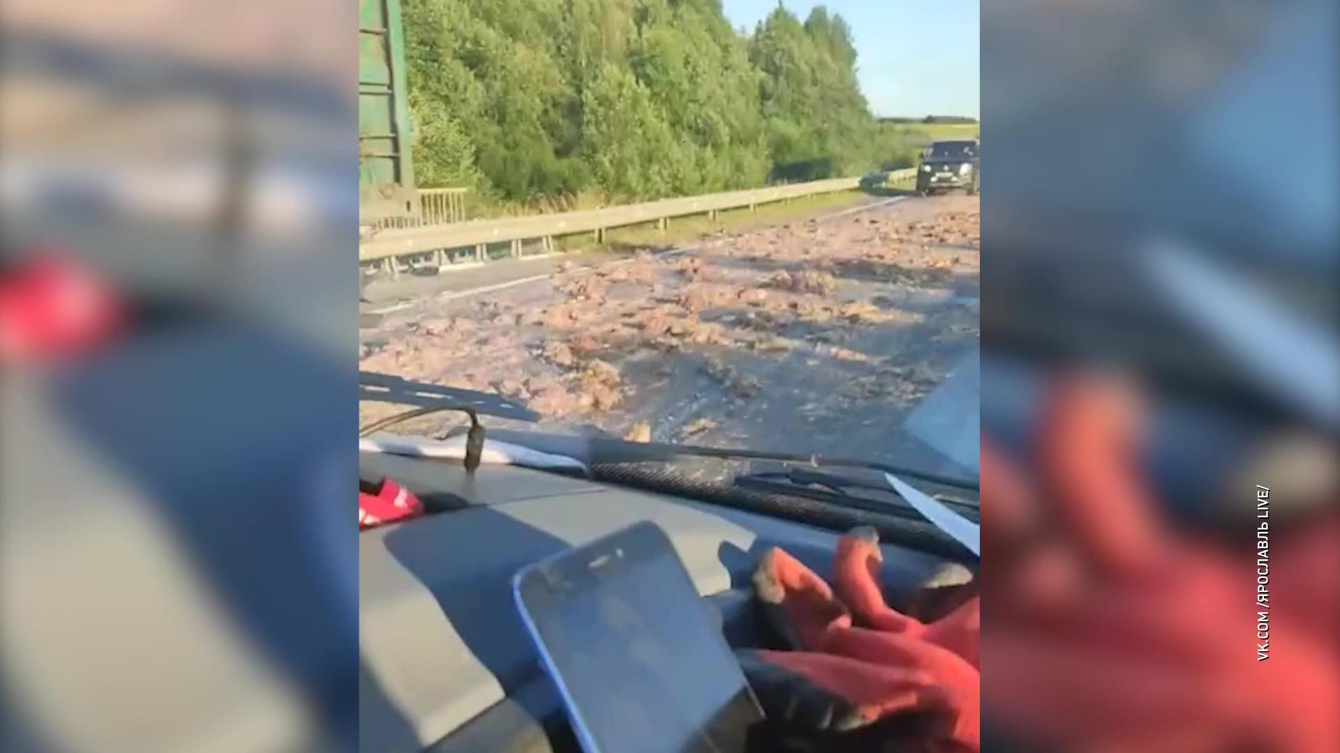 Километры фарша из птичьих трупов: в Гаврилов-Ямском районе по дороге раскатали мертвых куриц