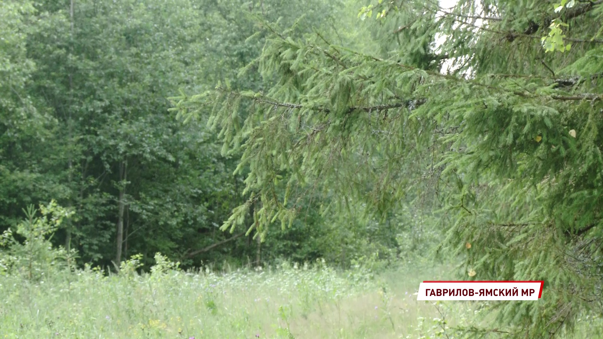 В Ярославской области проверили кормушки для диких животных и птиц