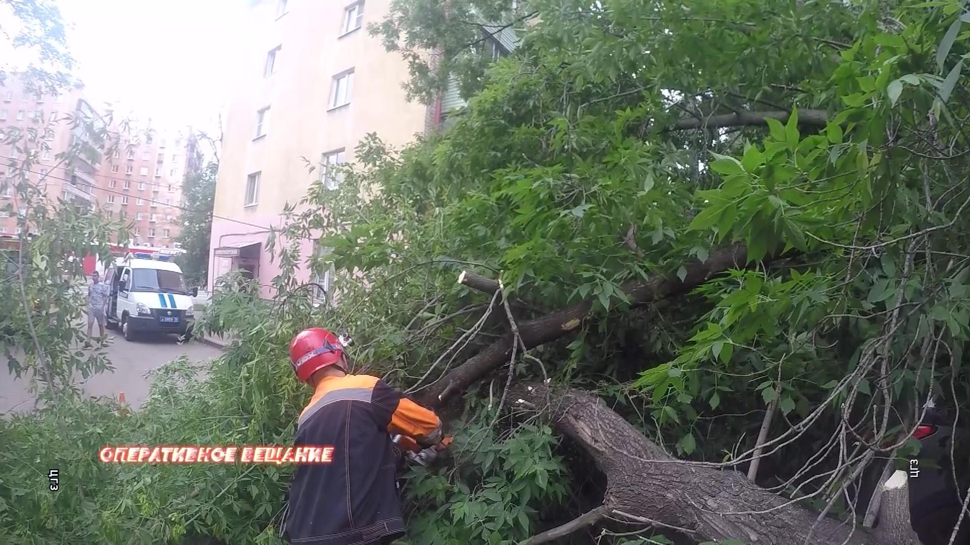 В Ярославле упавшее дерево смяло сразу две машины