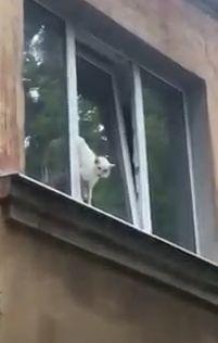 В Ярославле кота зажало в оконной раме