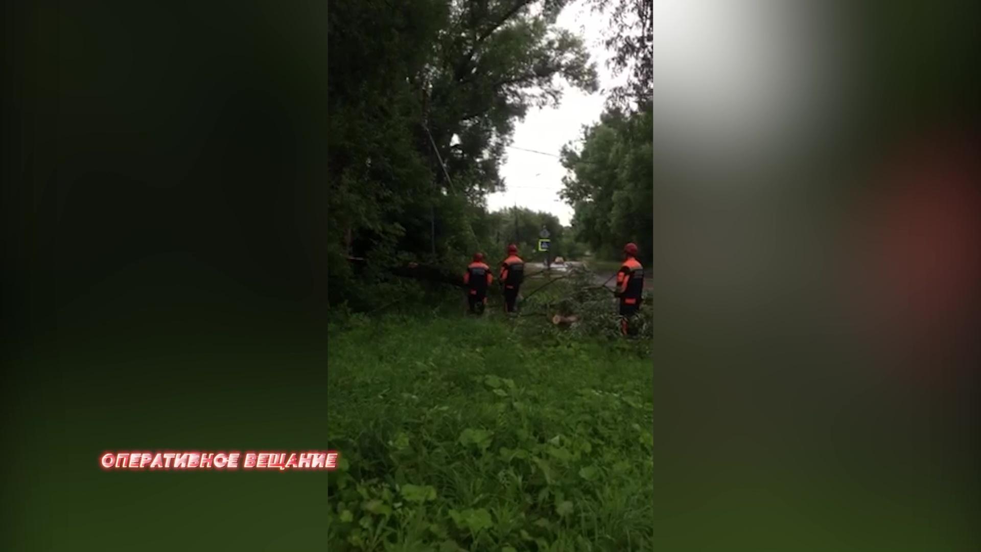 В Ярославле рухнувший клен повалил электрический столб