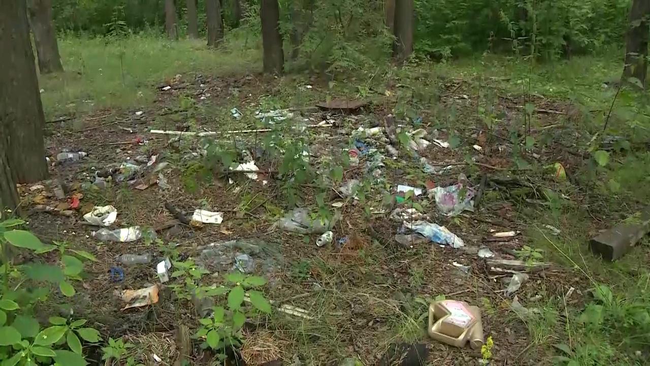 В лесу в Ярославском районе собрали почти пять кубометров мусора