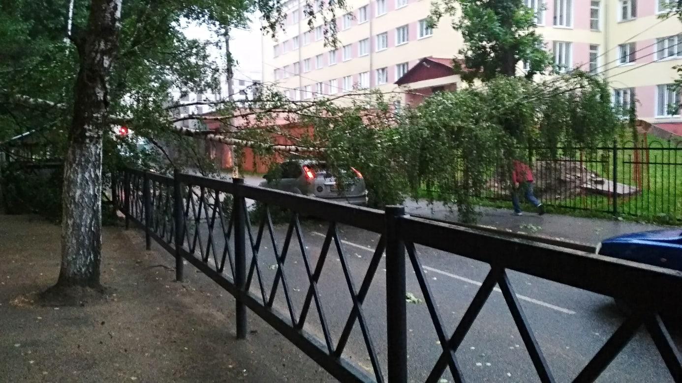 Гроза повалила несколько деревьев в Ярославле