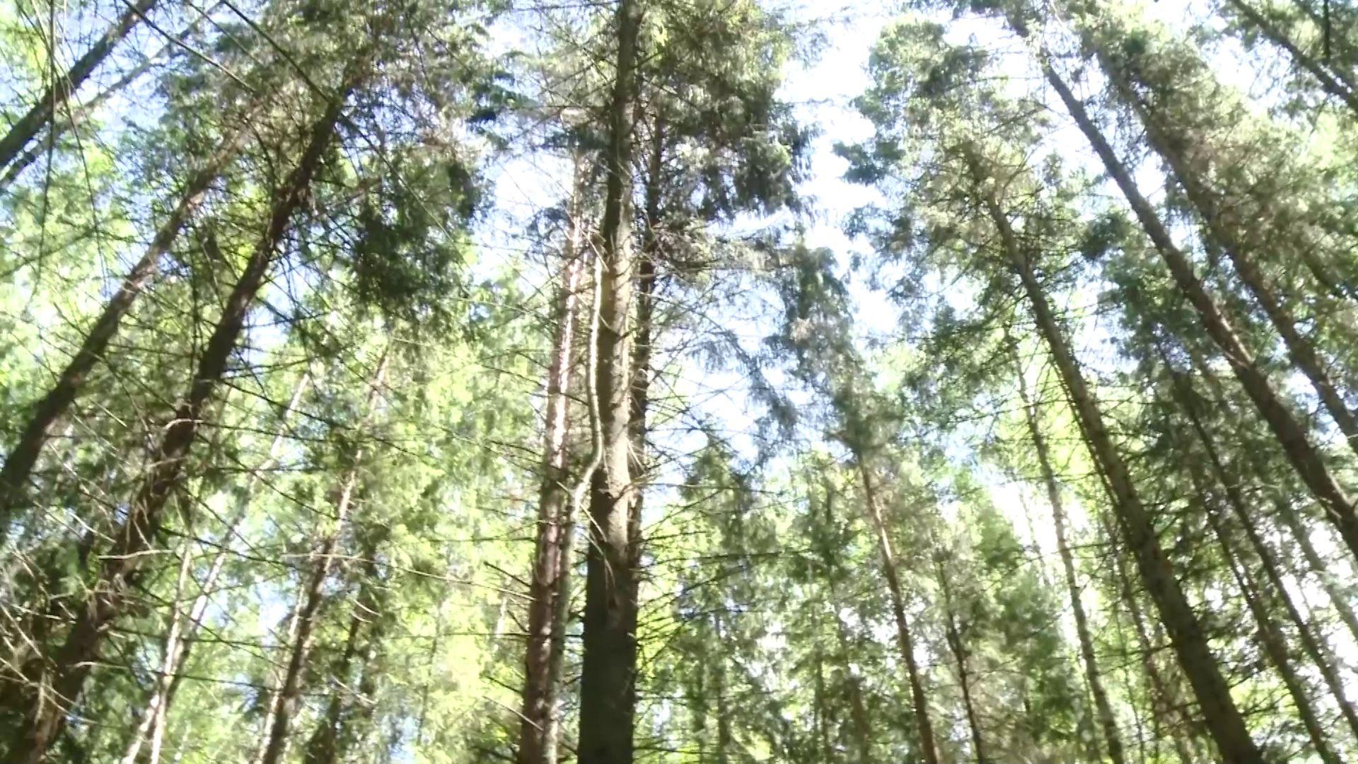 Арендаторы ярославских лесов пополнили федеральный и региональный бюджеты на 100 миллионов рублей