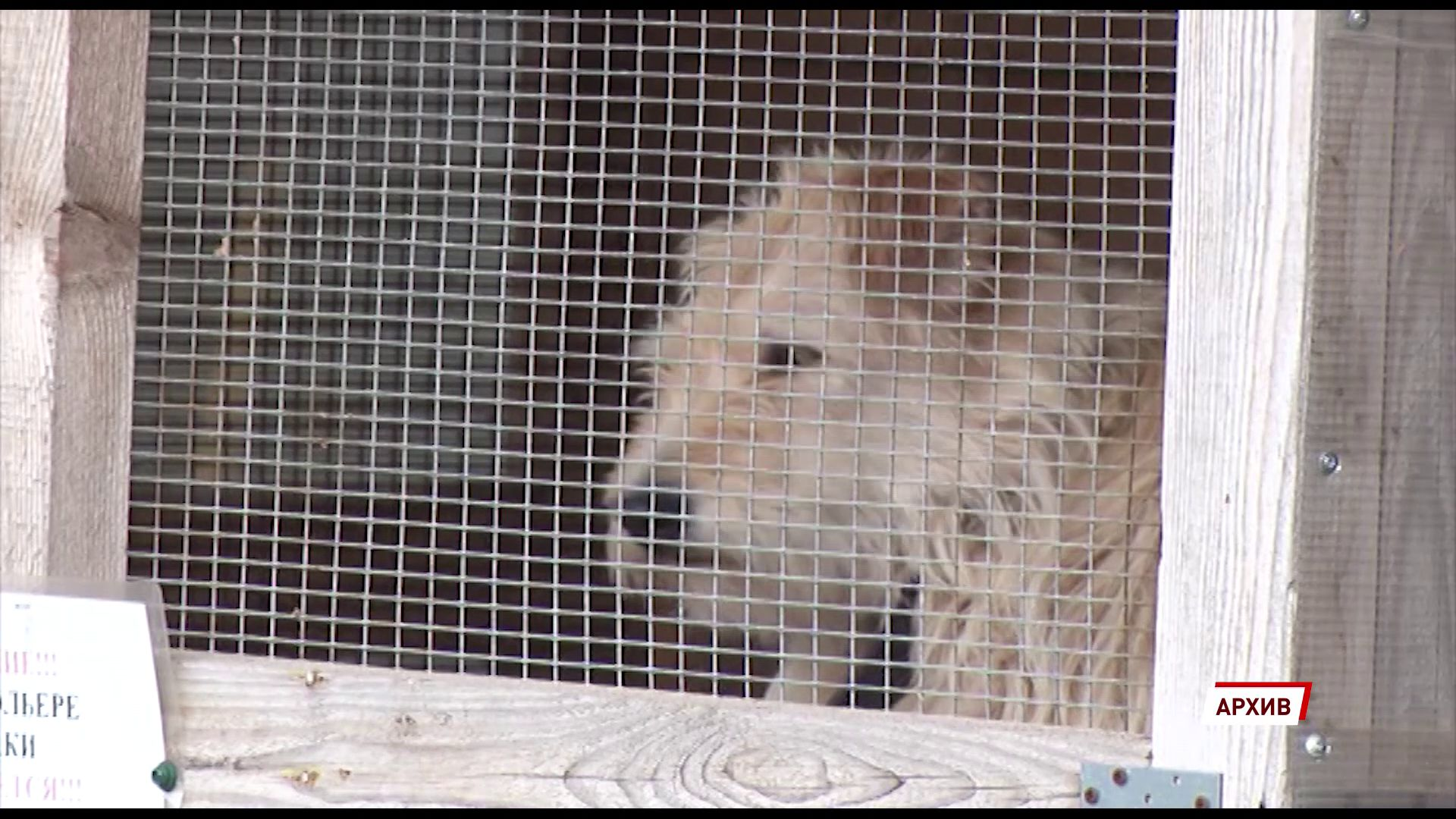 15 августа в ярославском муниципальном приюте для собак пройдет день открытых дверей