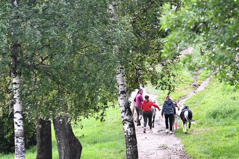 В Ярославле участились случаи несанкционированного катания на лошадях
