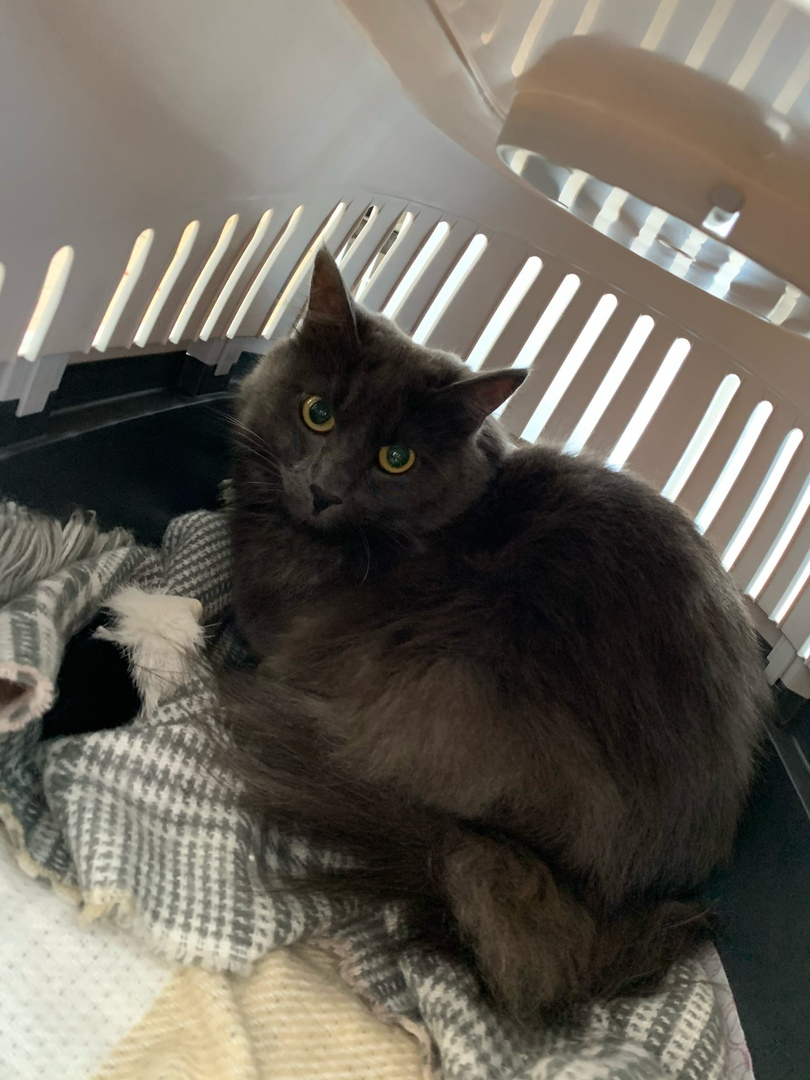 В аэропорту Туношна из багажного отделения сбежал кот