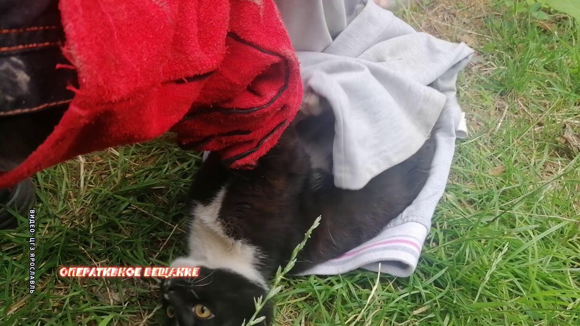 В Ярославле кот застрял в моторном отсеке автомобиля