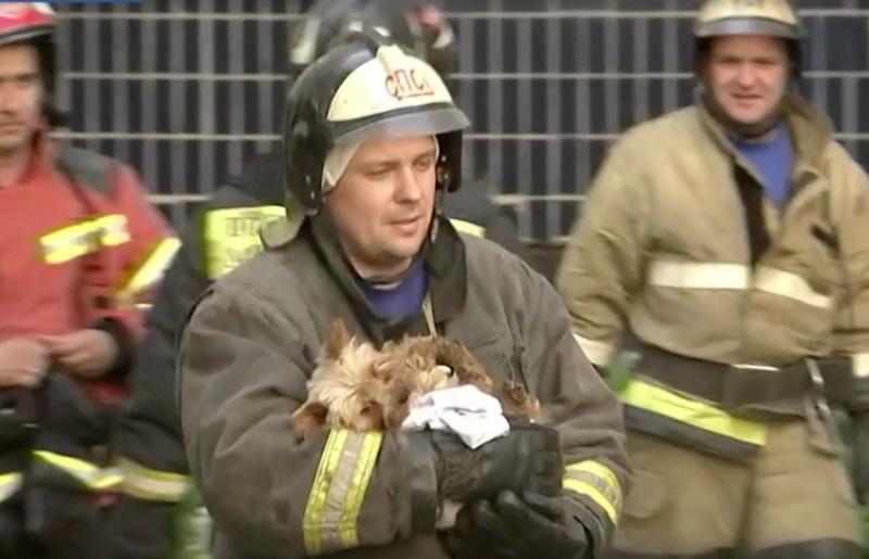 Из дома на Батова, где произошел взрыв газа, спасли 14 человек и 150 домашних животных