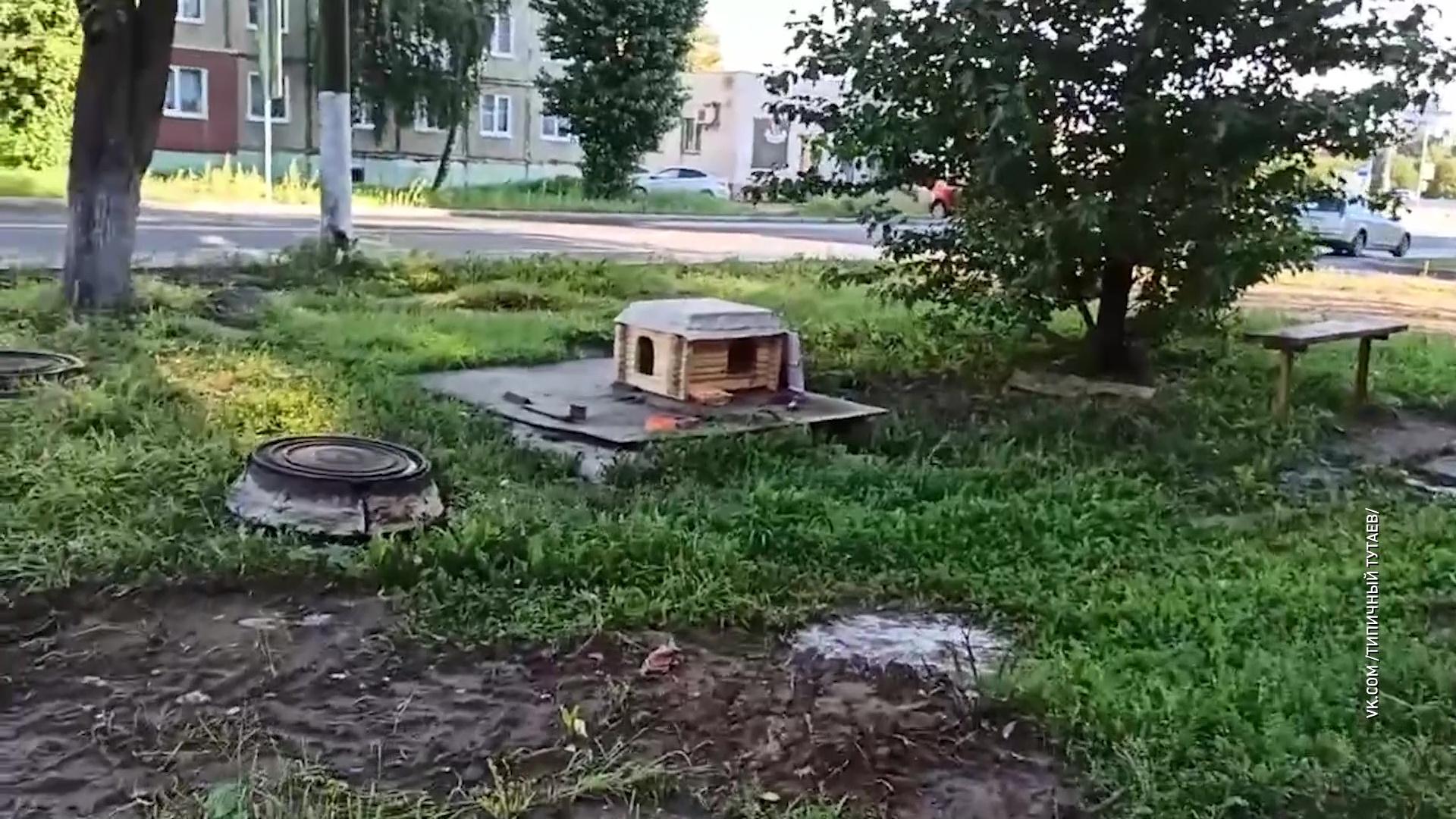 Тутаевцы построили домик для бездомных кошек, чтобы они не мерзли и не голодали