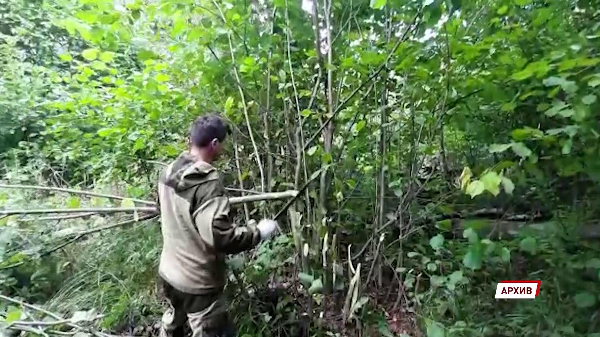 Рыбинец вырубил лес на три миллиона рублей