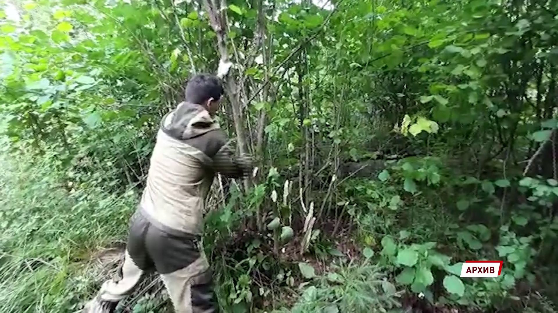 Директора «Угличского лесничества» осудили за превышение должностных обязанностей
