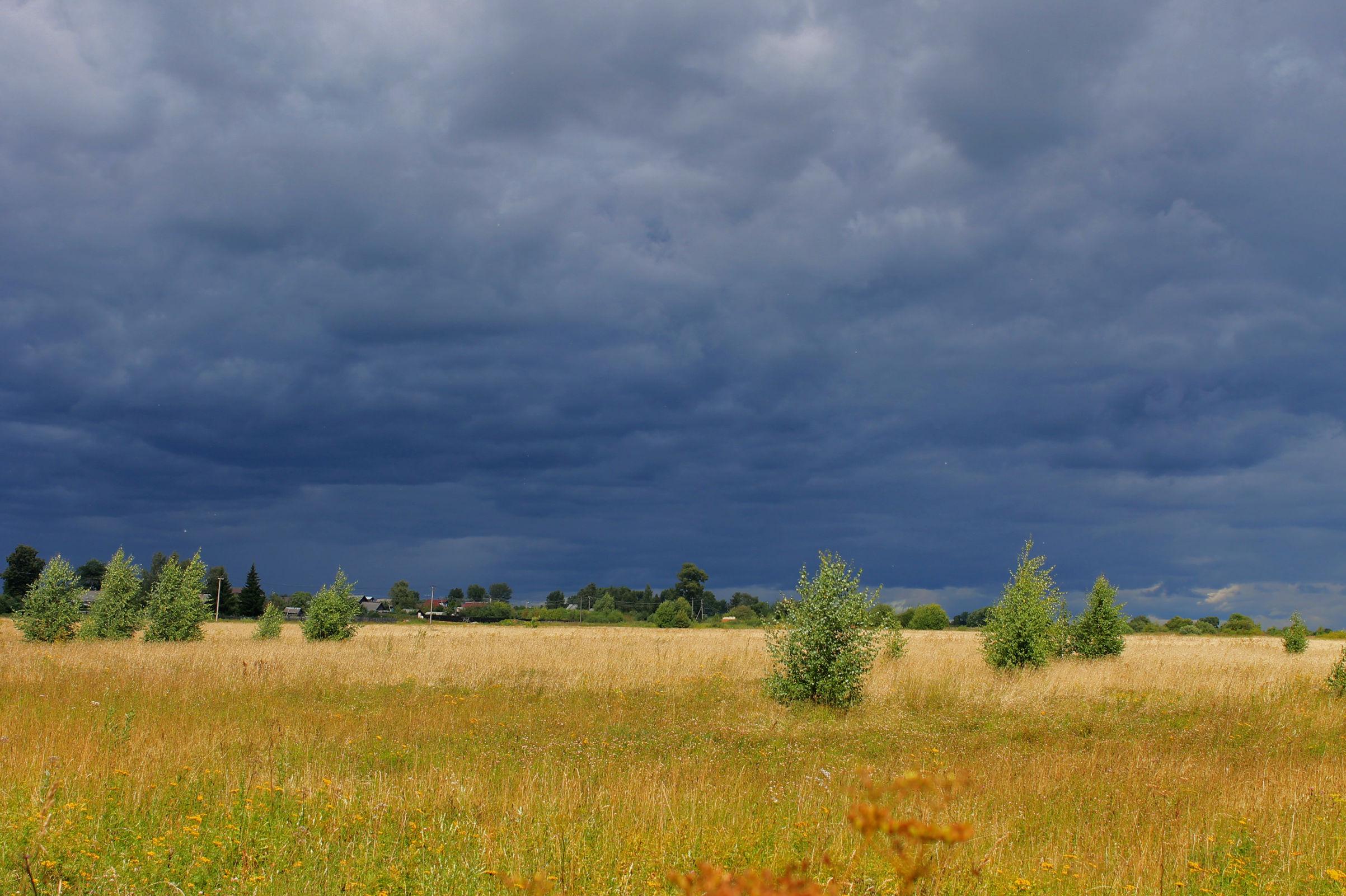 Началась метеорологическая осень: в Ярославской области усилится ветер, пройдут дожди