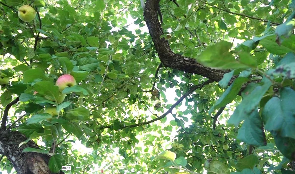 Утреннее шоу «Овсянка» от 14.09.20: учимся бегать правильно и прививать деревья