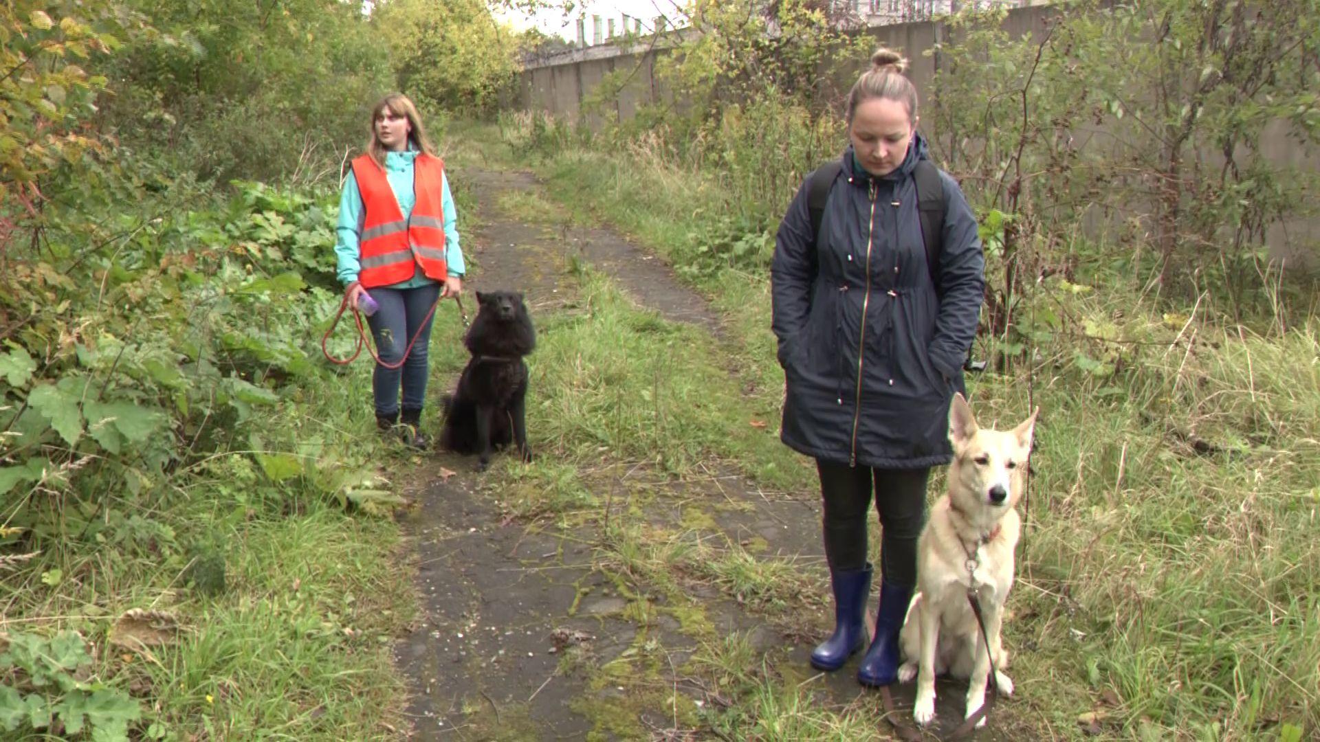 В Ярославле поисково-спасательный отряд провел учения для четвероногих героев