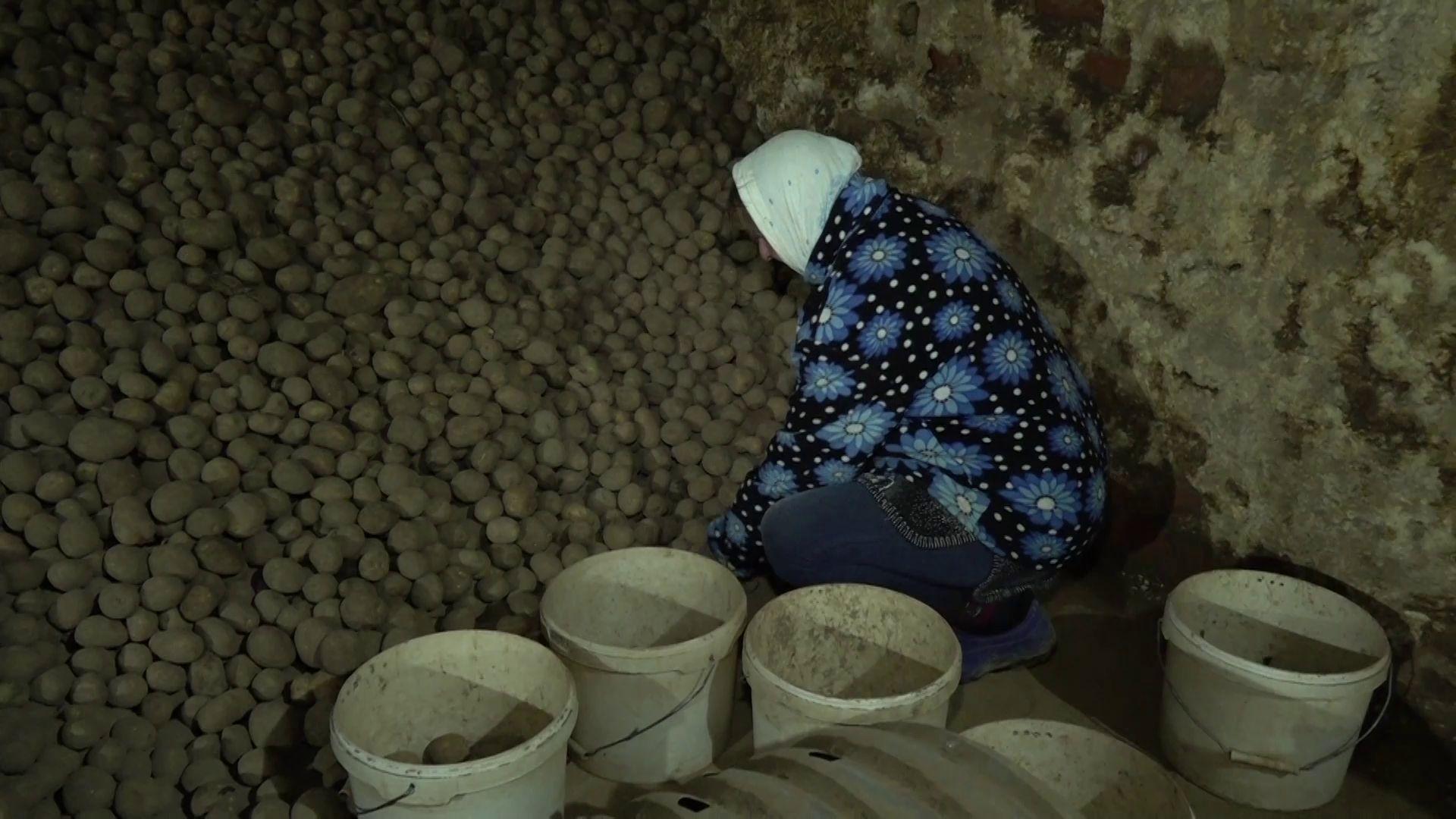 В Ярославской области подвели итоги эксперимента по применению гуматов