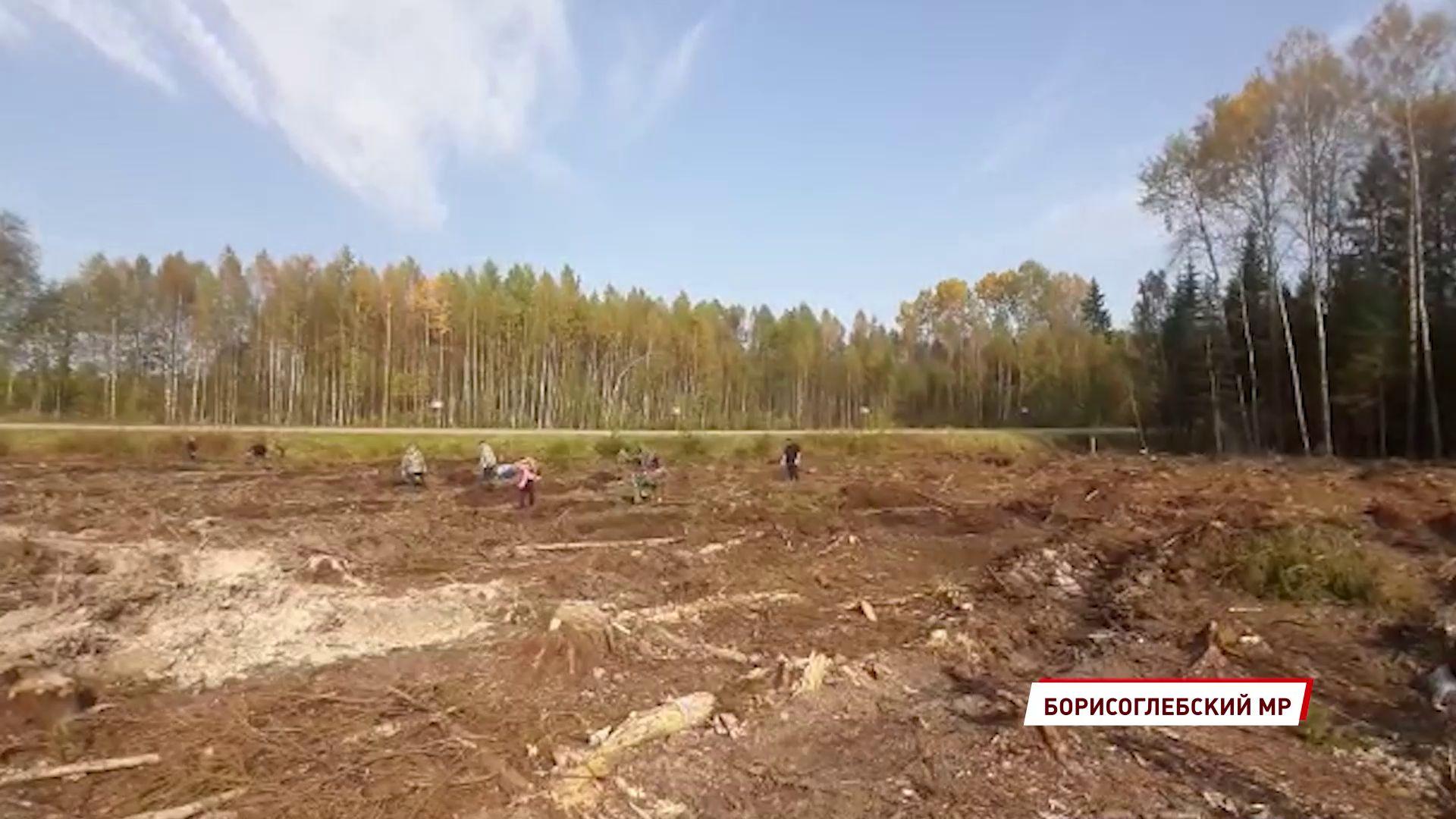 В Борисоглебском районе посадили больше пяти тысяч деревьев