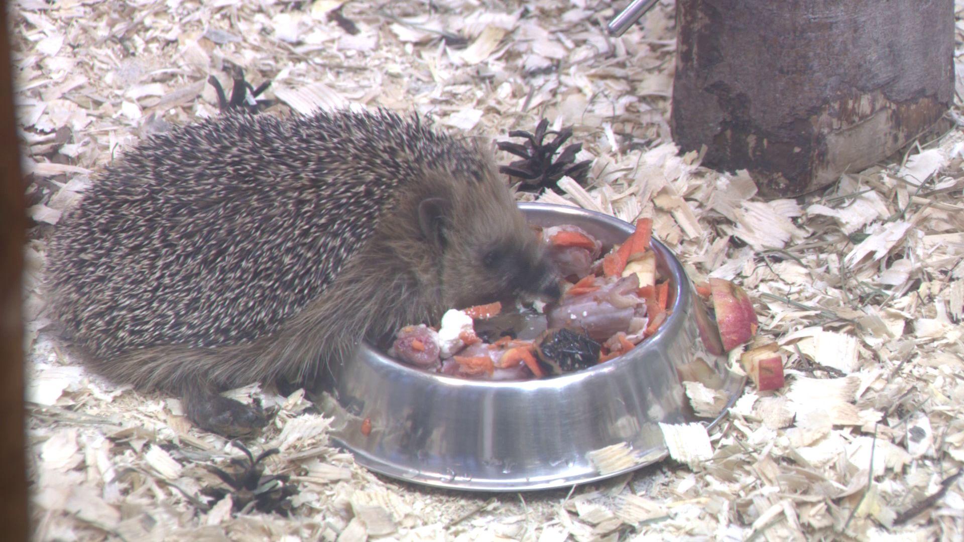 В ярославском зоопарке животные начали готовиться к зимней спячке