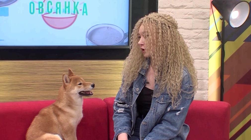 Утреннее шоу «Овсянка» от 28.09.20: о сиба-ину и гибридах вишни и черешни