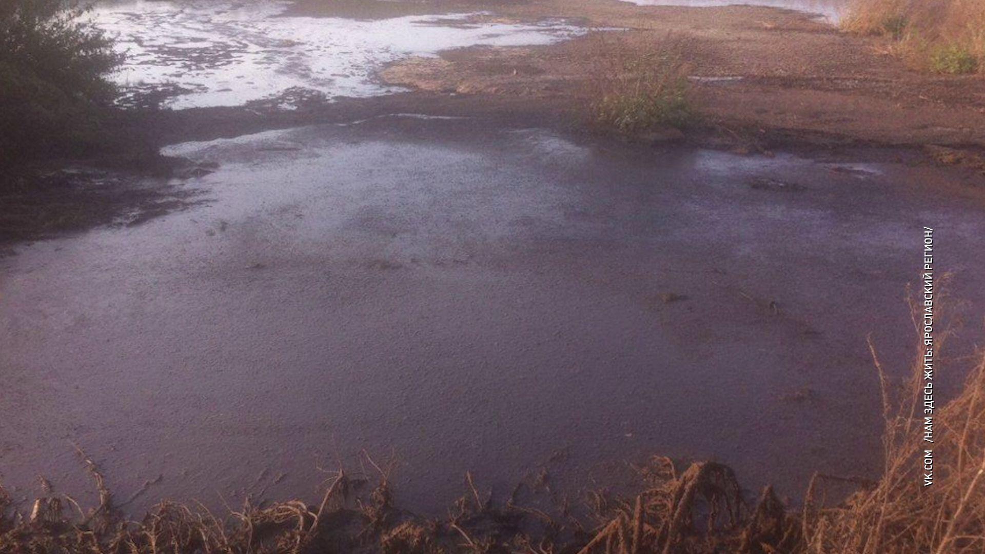 Под селом Медягино люди обнаружили целое поле отходов с фермы