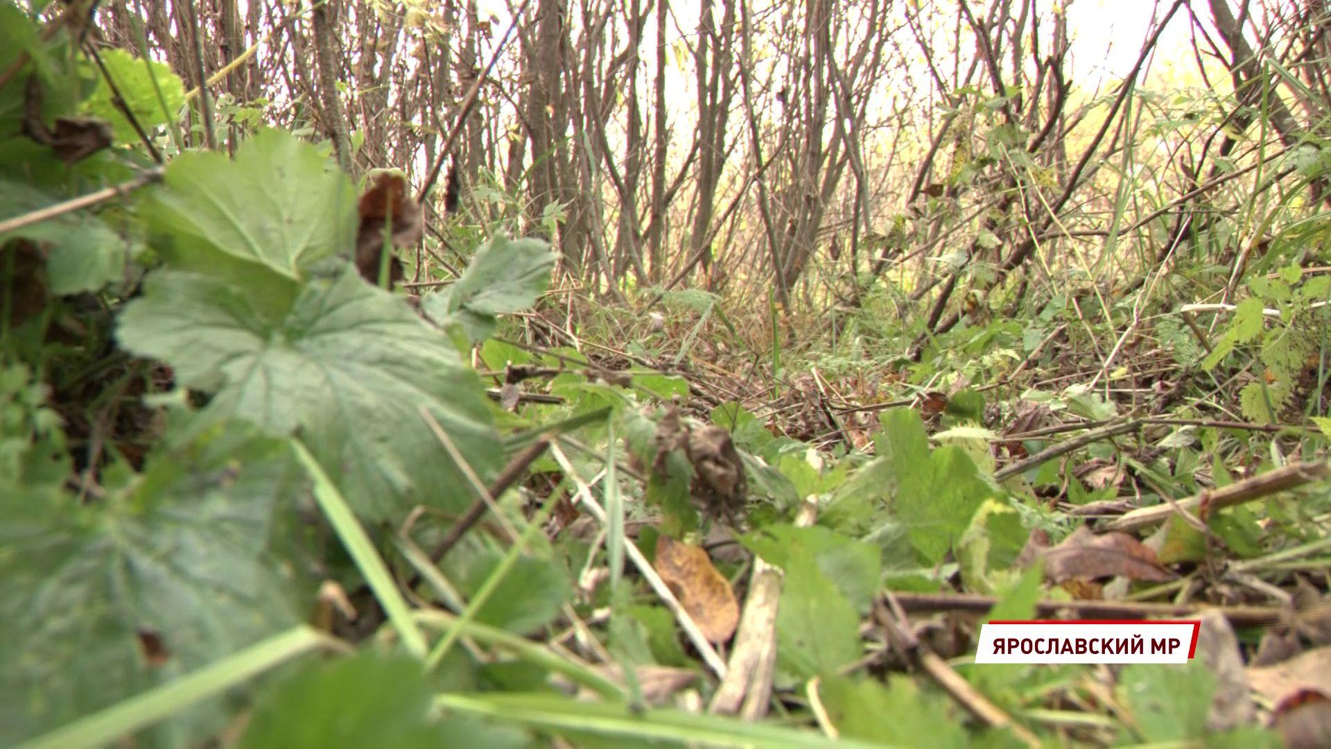 В Ярославской области началась сезонная прививочная кампания диких животных