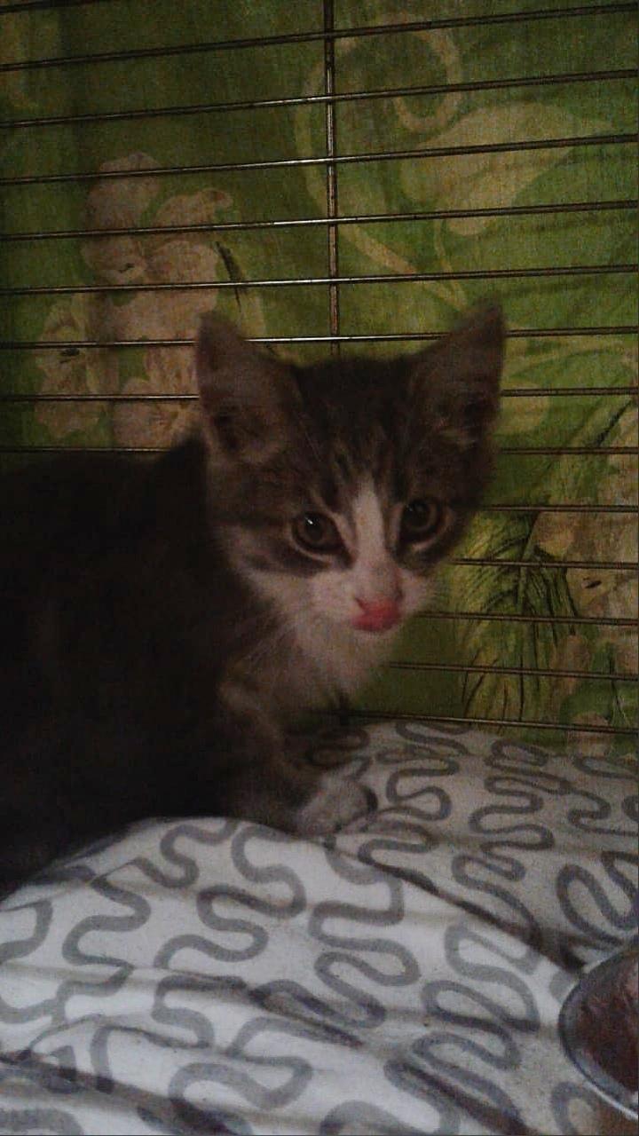 Неравнодушные ярославцы спасли котенка, застрявшего под капотом автомобиля